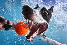 "Underwater Dogs ""DOGS INSPIRE US!""by Seth Casteel's Little Friends Photo. http://www.pinterest.com/petmoods/underwater-dogs/"