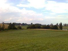 Łąka na końcu polnej drogi (w stronę jeziora) w Staświnach. Widok w stronę drogi powiatowej do Giżycka.