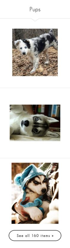 """Pups"" by amyrosemariee ❤ liked on Polyvore featuring animals, pets, dogs, pictures, imagenes, pics, fluffies, icons, icon pictures and images"