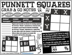 Grab-and-Go Notes: Punnett Squares Science Resources, Science Education, Teaching Science, Life Science, Food Science, High School Biology, Biology Teacher, Middle School Science, School Fun