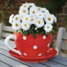In this article, we will show to you how to make a mini DIY garden in a coffee mug for your home. You could do that by planting flowers Diy Garden, Garden Pots, My Flower, Flower Art, Fresh Flowers, Beautiful Flowers, Arreglos Ikebana, Daisy Love, Growing Roses