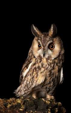 Natures Images - wildlife photography holidays and wildlife photography workshops - Night Owls