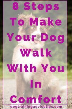 Dog Training Commands 8 Steps To Make Your Dog Walk With You In Comfort. Training Commands 8 Steps To Make Your Dog Walk With You In Comfort. Dog Breeds Little, Best Dog Breeds, Pedigree Dog Food, Dog House Air Conditioner, Big Dog Toys, English Dogs, Cute Dog Collars, Best Dog Training, Dog Barking