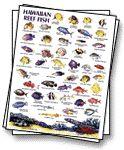 Maui fish franko 39 s molokai creatures guide maui hawaii for Hawaiian reef fish identification