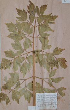 Beautiful antique herbarium by Sansprix on Etsy