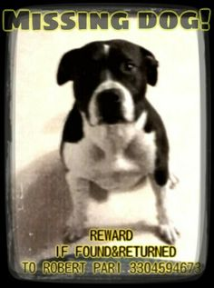 RECORD 9833 LOST DOG AKRON, OH 1/20/17