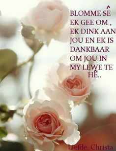 Blomme Afrikaanse Quotes, Goeie Nag, Goeie More, Birthday Quotes, Favorite Quotes, Happy Birthday, Rose, Receptions, Amen