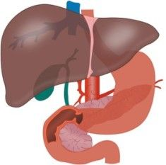 Reduced production of liver enzymes may indicate dysfunction of the liver. This article explains the causes and symptoms of low liver enzymes. Scroll down to know how the production of the enzymes can be accelerated. Fatty Liver Remedies, Fatty Liver Symptoms, Fatty Liver Diet, Healthy Liver, High Liver Enzymes, Liver Cleanse Juice, Hepatitis B, Liver Detoxification, Liver Failure