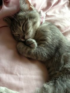 Looking at this sleepy kitty makes me want to go and take a nap