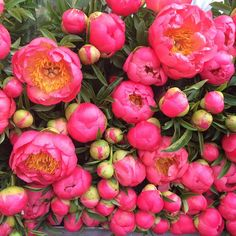 Peonies Roses and Rolltops : Columbia Road Flower Market {a late summer update}