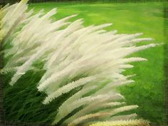 #Nature #Whitegrass #garden
