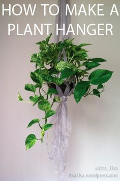Mr. Pothos' New Plant Hanger
