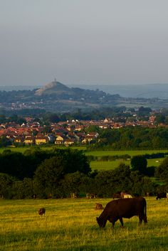 Day 10 - Landscape. Glastonbury Tor viewed from Walton Hill, Somerset