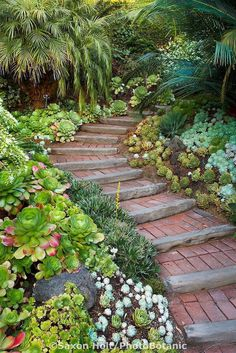 Stairs, steps going up walkway into California garden with succulent groundcover mix (brick flower bed pathways) Garden Stairs, Backyard Fences, Backyard Landscaping, Landscaping Melbourne, Landscaping Ideas, Landscaping Software, Farm Fence, Fence Art, Pool Fence