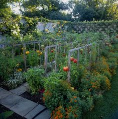 Within the last couple of years potager gardens have become popular in the garden design world. Most people wonder how to design one particular potager garden design Vegetable Garden Tips, Veg Garden, Edible Garden, Fruit Garden, Tomato Garden, Indoor Garden, Backyard Vegetable Gardens, Garden Cottage, Small Vegetable Garden Ideas On A Budget