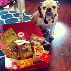 This pug is cute as a button! Love With Food Subscription Box-try it for  $2. They donate a meal to food banks for every box shipped! It's win-win! https://lovewithfood.com/freetrial?code=FBFRIEND&m=f&ref=2y9T&s=is&utm_campaign=facebook-invite&utm_content=facebook-invite-303275&utm_medium=invite&utm_source=facebook