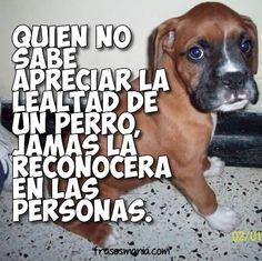 Quien no sabe apreciar la lealtad de un perro, jamás la reconocerá en las personas