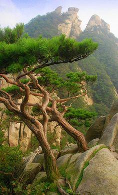Mangyeongdae Peak, Bukhansan National Park (북한산국립공원), Seoul, South Korea by Damon Tighe