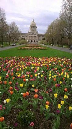 2015 Tulips at Kentucky Capitol