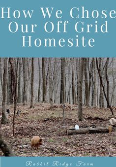 Thinking about building an off grid homestead? Learn about how we picked a homesite!