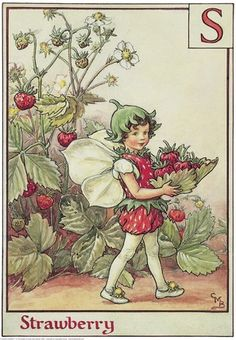 Illustration for the Strawberry Fairy from Flower Fairies of the Alphabet. A small boy fairy walks towards the left holding a leaf shaped as a basket in his hands. The basket is full of wild strawberries.  										   																										Author / Illustrator  								Cicely Mary Barker