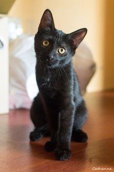 I want a black kitten!!