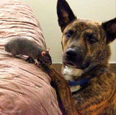 Ok, so we all know that unlikely animal friendships are more likely to happen than you might think, but this mismatched pair is one of the s...