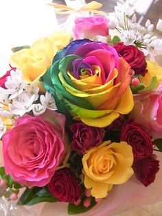 rainbow rose split the stem and submerge each part in different colored waters