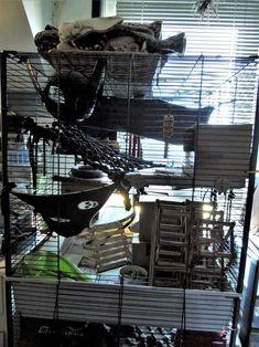 Pet Rat Cages, Pet Rats, Pets, Rat Care, Squirrel, Tower, Facebook, Rook, Computer Case