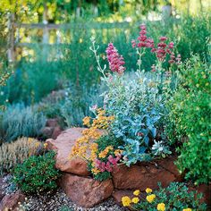 Colorful Planting Partners:   When designing your rock garden, think of the space as a series of eye-catching vignettes that paint the overall landscape. Here, the orange blooms of Eriogonum umbellatum stand out against the gray-green foliage and pink blooms of Mojave sage (Salvia pachyphylla). Both plants are drought-tolerant and thrive with little maintenance.