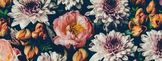 FLOWER stock photos, royalty-free images, vectors, video Horse Wallpaper, Pink Wallpaper, Pattern Wallpaper, Adobe, Canvas Paper, Canvas Wall Art, Colorful Flowers, Beautiful Flowers, Flower Shop Design