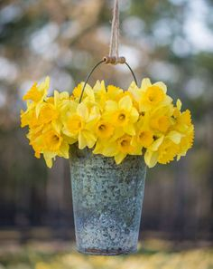 So simple and chic. #daffodils #garden