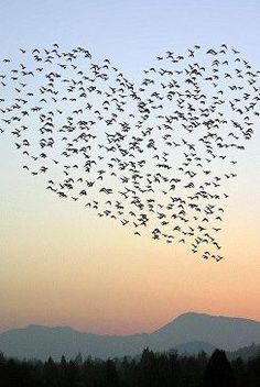 Meditation und Liebe - Heart made with birds in the sky how cool is this I love it Mehr My Heart Is Yours, I Love Heart, Heart Pictures, Heart Images, Heart In Nature, Heart Art, Nature Nature, Meditation, Birds In The Sky