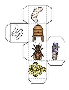 Bees Life Cycle, Bee Themed Math, Graphing Activities, Poetry Search Honey bee life cycle learning cube, with graphing activities and. Graphing Activities, Science Activities For Kids, Montessori Activities, Kindergarten Activities, Writing Activities, Honey Bee Life Cycle, Life Cycle Craft, Bee Crafts, Life Cycles