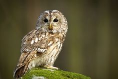 Meet, handle & fly an array of owls on a half-day owl experience plus ice cream at the Birds of Prey Centre, Bedford.