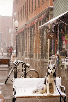 """A Telluride Dog's Life"" -- [Telluride Ski Resort - Colorado]~[Photograph by Tony Demin - posted by Visit Colorado - September 28 2009 - Aspen Ridge, Telluride, Colorado - US]'h4d'121216"