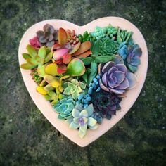 Rainbow succulents Heart shaped container garden