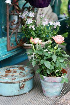 rosa-shabby #gardencorner #garden
