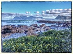 Wild flowers, mountains, hues of Blue-Muizenberg, #CapeTown . John Coleman sure has a keen eye. GORGEOUS landscape.Embedded image permalink