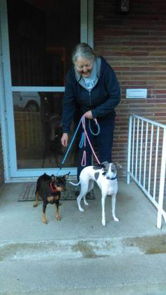 2 dogs from Germany to Spokane WA