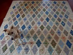 Hexagon quilt with my whippet on