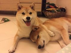 """""""Doesn't everyone get annoyed with their shiblings sometimes?"""" 