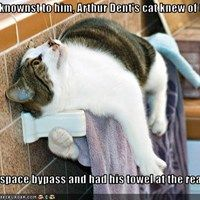 Unbeknownst to him, Arthur Dent's cat knew of the   hyperspace bypass and had his towel at the ready.
