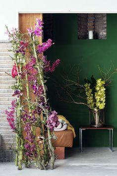Orchidee #Mooiwatbloemendoen
