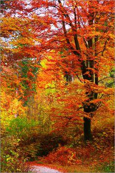 Falko Follert Art-FF77 - Herbst