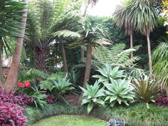 Sub-Tropical Garden - Landscape Design, Garden Care Services And . Sub-tropical garden - Landscape design, garden care services and - Home decor Backyard Garden Landscape, Small Backyard Gardens, Garden Shrubs, Garden Oasis, Garden Pond, Lush Garden, Garden Planters, Florida Landscaping, Tropical Landscaping