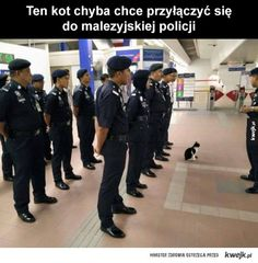 Meanwhile In Asia - Part 219 Pics) Asian Humor, Netflix Premium, Very Funny Memes, Pokemon, Animal Antics, Im Depressed, Meanwhile In, Best Memes, Best Funny Pictures