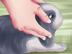 How to Train a Rabbit -- via wikiHow.com