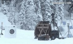 17 GIFs of Animals Enjoying Snow Way More than You Ever H...