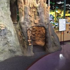 Manitoba Childrens Museum Indoor Tree House Slide Year Round - Children's museum birthday party winnipeg